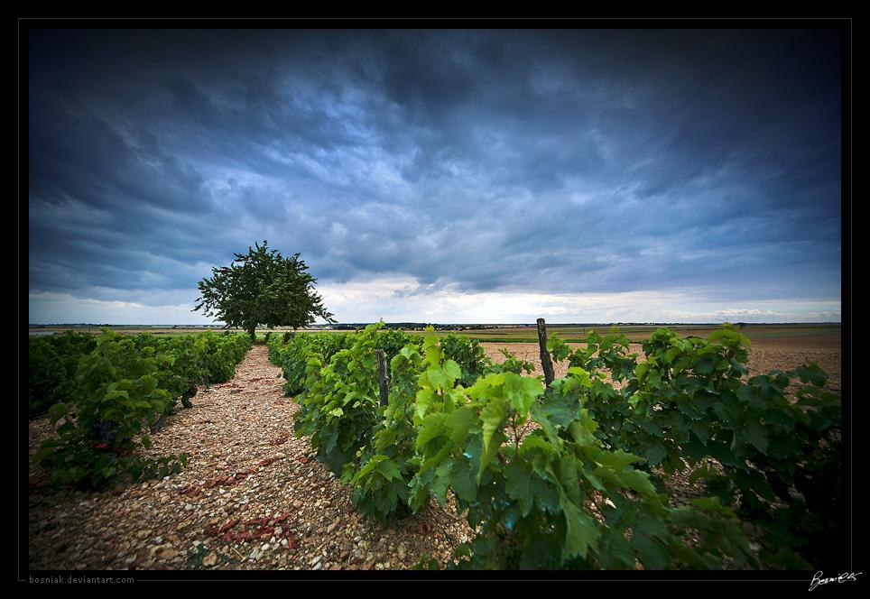 Last grapes by bosniak
