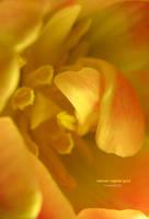 natural vegetal gold by bosniak