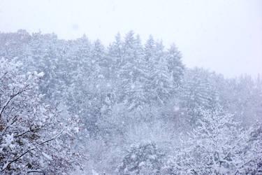 Snowy Fall