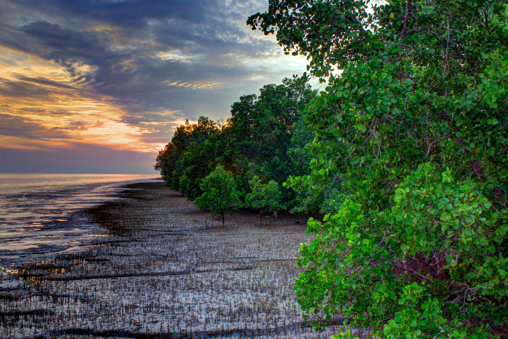 Mangrove Forest At Bengkalis Island By Nothing4ll On