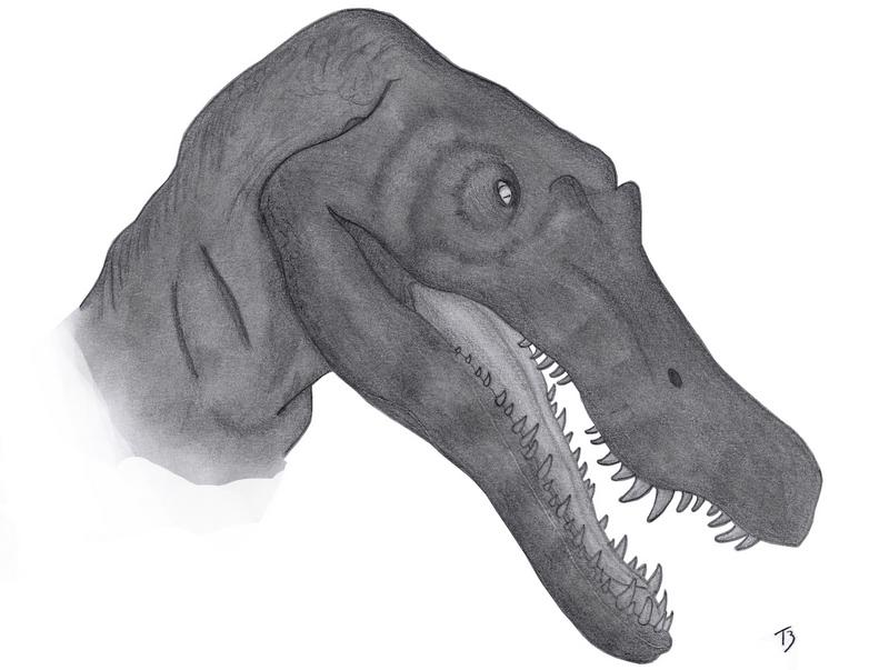 Spinosaurus by BavarianGoassBeard