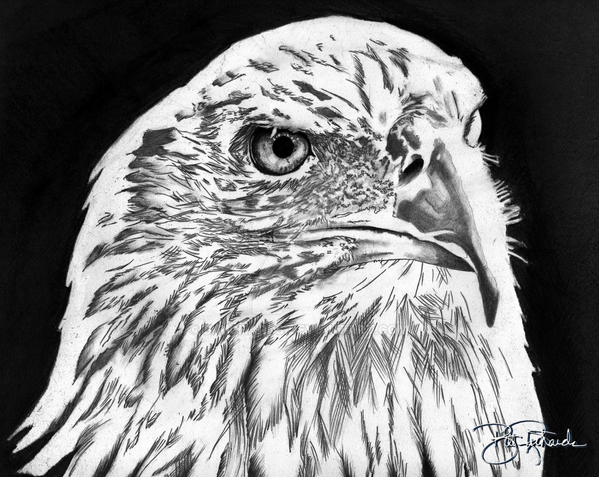 American Bald Eagle by B-Richards
