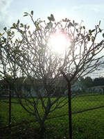sun glaring at tree by blubooelle