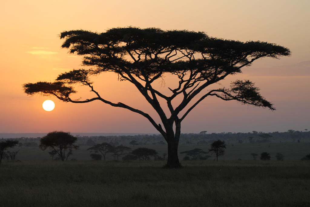 African Sunrise by syoul-stock