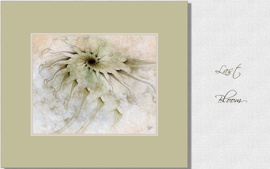 Last Bloom by GypsyH