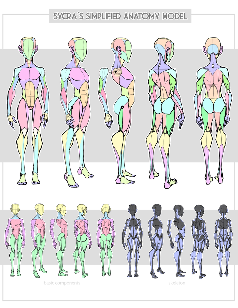 Sycra\'s Simplified Anatomy Model by Sycra on DeviantArt