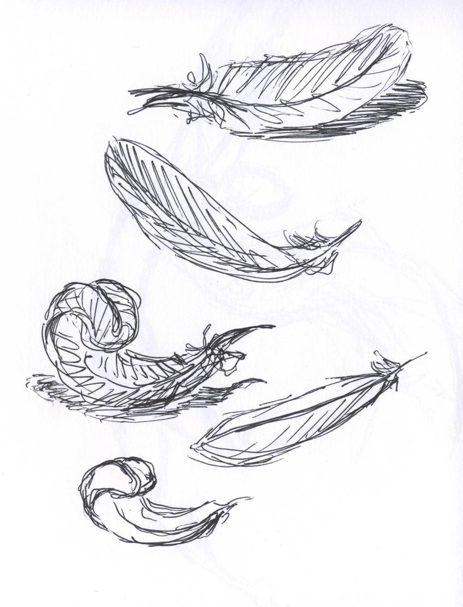Pin turkey feather coloring page pages on pinterest for Coloring pages of feathers