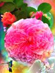 Flowers39