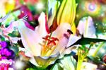 Flower86