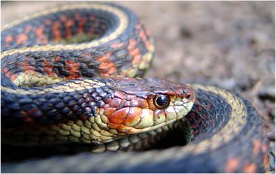 Oswald The Snake