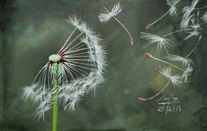 Dandelion by Nakshatra13