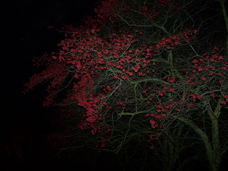 naktis danijoje by flamingamber
