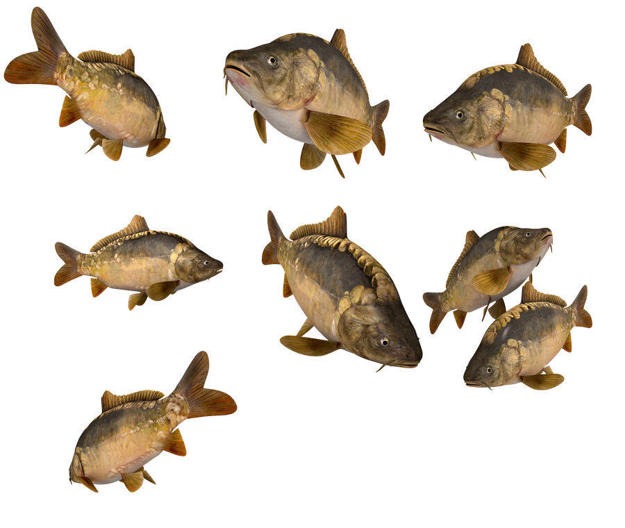 lake fish by darkadathea