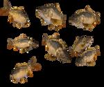 lake fish