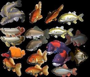 colours fish