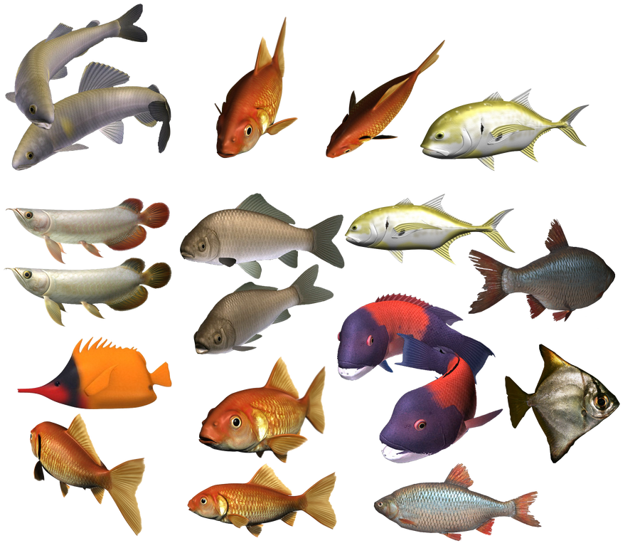 colours fish by darkadathea