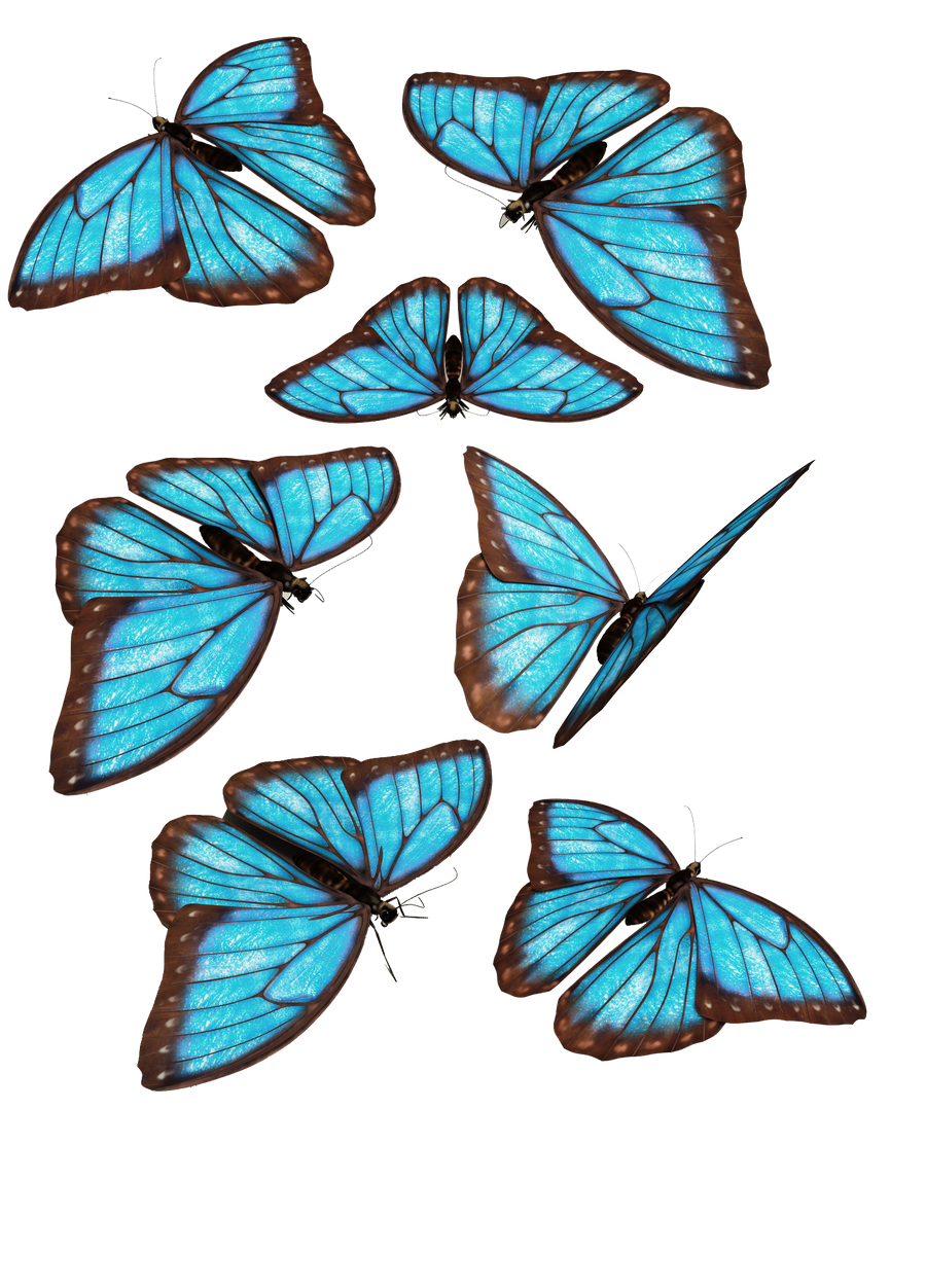 blue butterfly group - photo #36