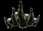 coral tiara horns