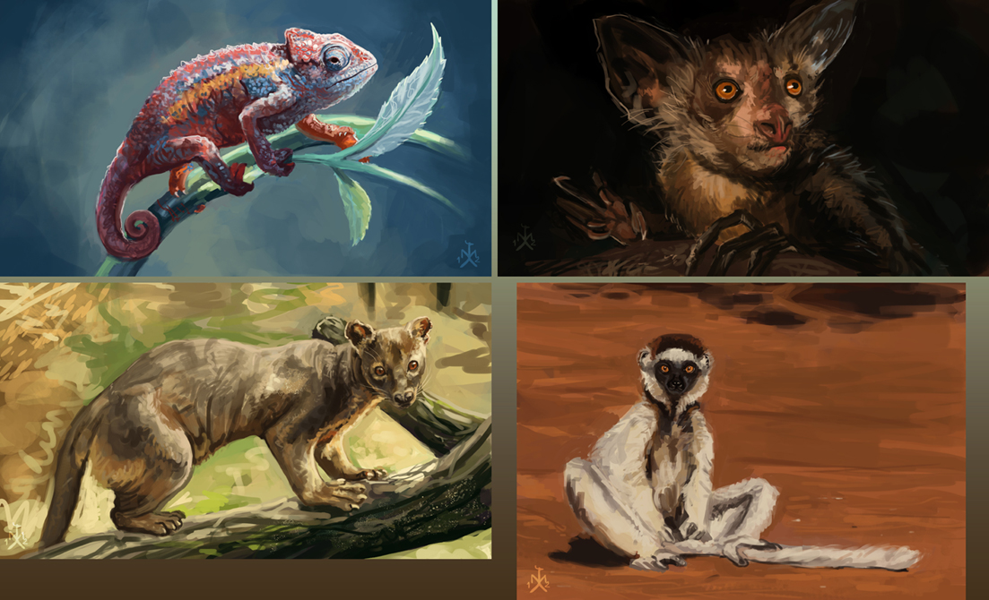 Speedpaint Animal Studies II by SunMoonDragoness