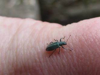 Cutie Bug by Puffling