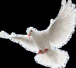 Dove2 By Wajdan Ali