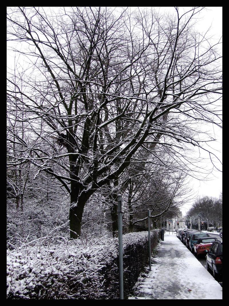 Winter On Regent Road by MrMD