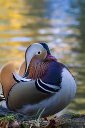 Duck II by nicolai-bauchrowitz