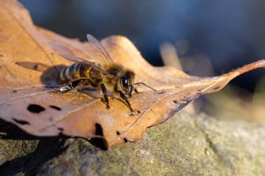 Wasp by nicolai-bauchrowitz