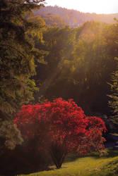 Mystic Red by nicolai-bauchrowitz