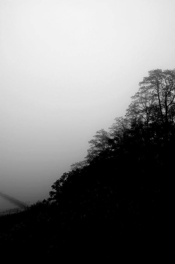 Trees After Rain II by ChappyApple