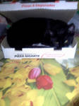 Pizza Cat