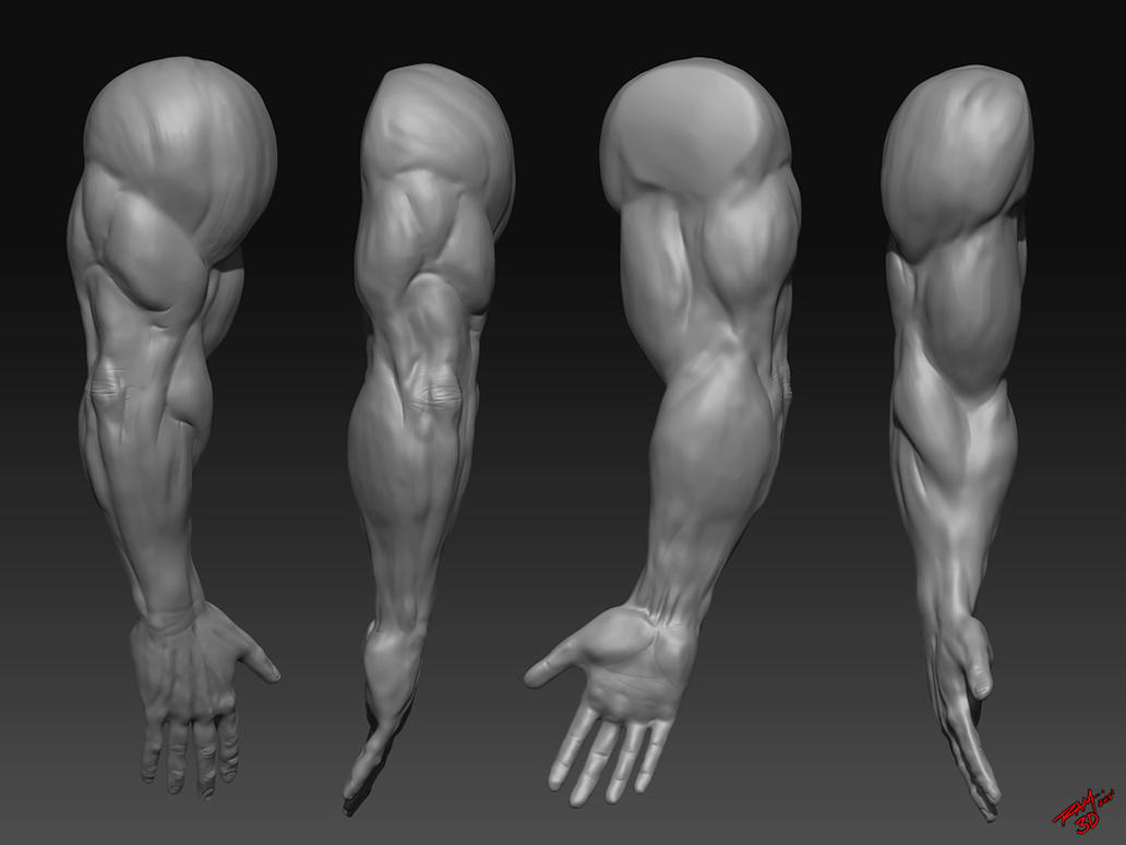Muscular Arms Sculpted by RAM by ramstudios1