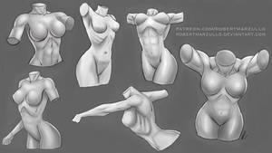 Female Torso Studies - Stylized by robertmarzullo