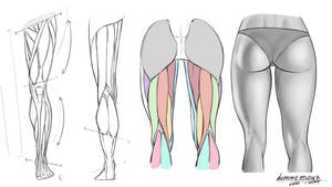Front Rear Leg Anatomy Reference Sheet