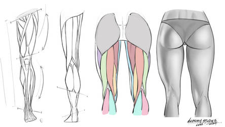 Front Rear Leg Anatomy Reference Sheet