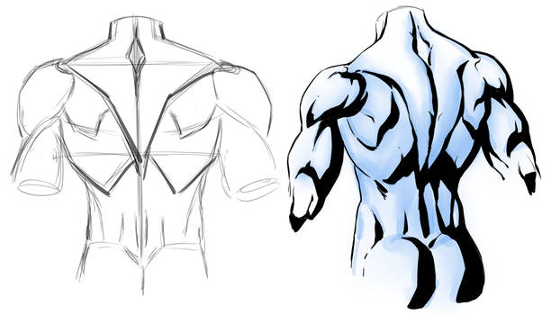 Drawing Back Muscles