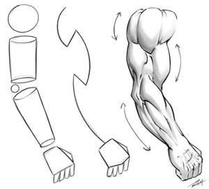 Drawing Arm Anatomy Tutorial