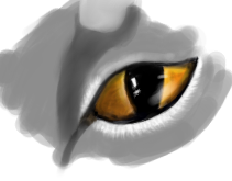 Teaser cat eye by reggy66