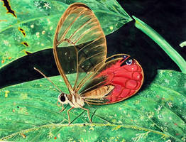 Butterfly Magnified