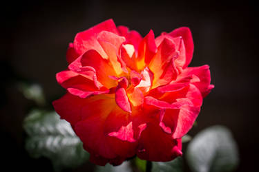 A rose by any other name by NiallAllen