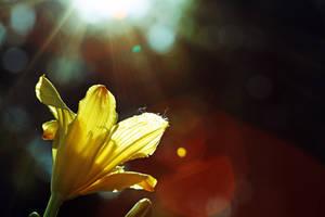 Hope by derelictSnowWhite