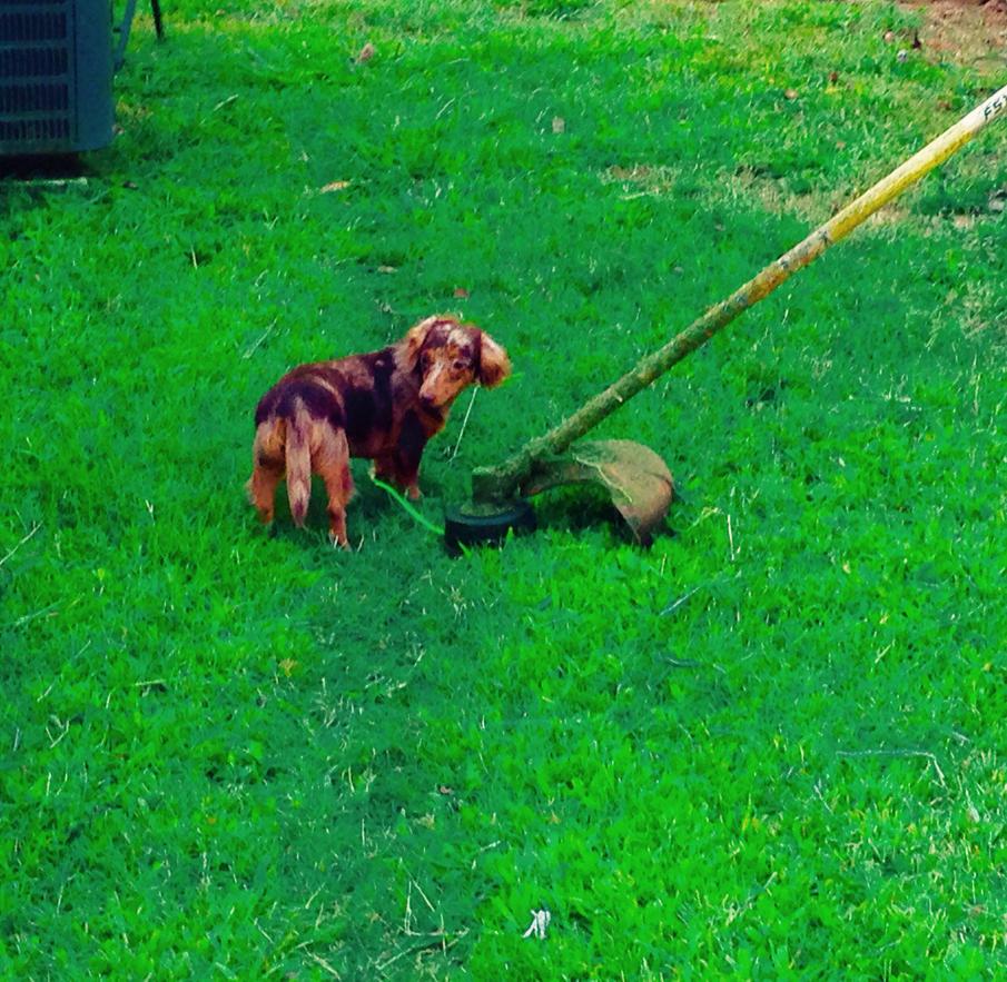 Big world , little dog by Prodestiny