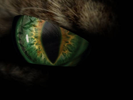Wildcat Eye