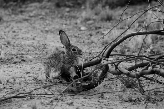 Hare without the Tortoise