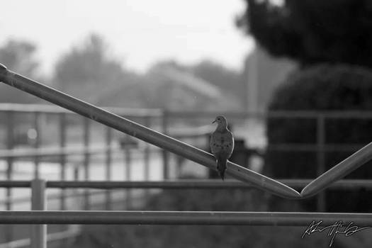 Perched on a Fence