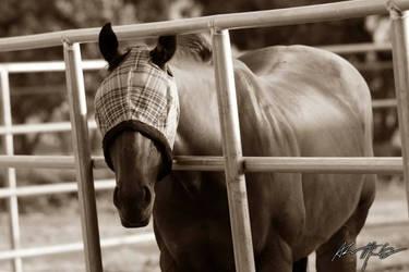 Horse in Sepia