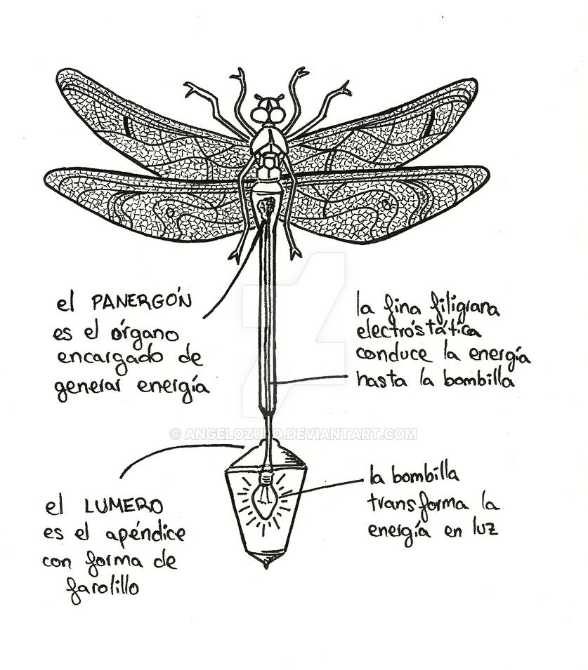 Anatomy of Taa (the bright dragonfly) by AngeloZulo on DeviantArt