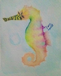 Tiny seahorse by Dai-Kuroki