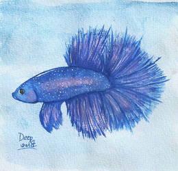 Bettafish by Dai-Kuroki
