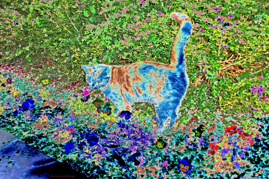 Blue Kitty by JKittredge